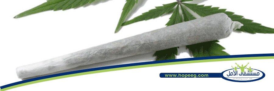 ماهو  نبات الماريجوانا وأخطاره؟